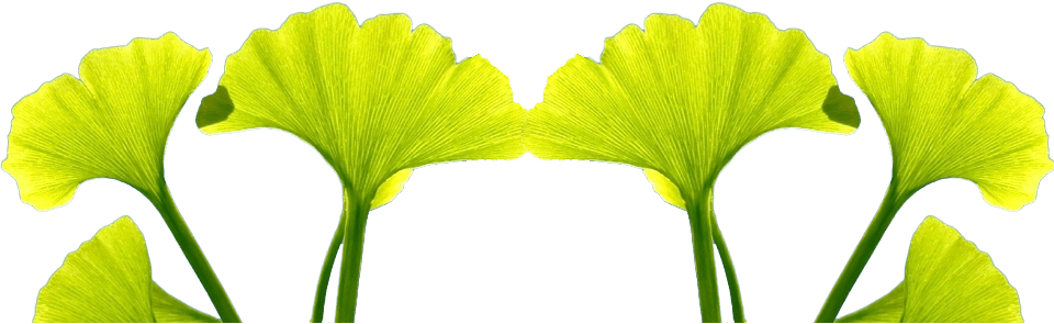 Gingko Biloba and Celastrus
